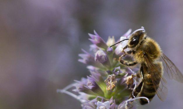 Słowo jest jak pszczoła, Mt 13, 1-23